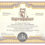Сертификат Ольги Козловской