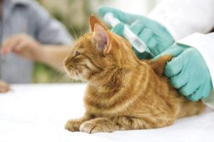 вакцинация животных 2