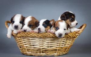 в каком возрасте купить щенка 1