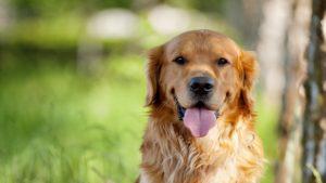 глисты у собаки 1