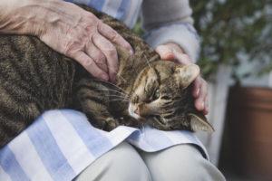 пожилая кошка 2