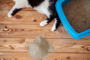 почему кошка перестала ходить в лоток 2