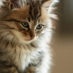 стерилизация кошек 2