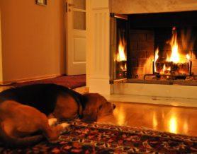 ожоги у собаки