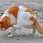 Кожный зуд у кошек и собак
