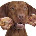 Собака с костью фото
