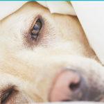 Рак у собак и кошек