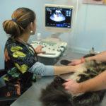 датчик узи ветеринария