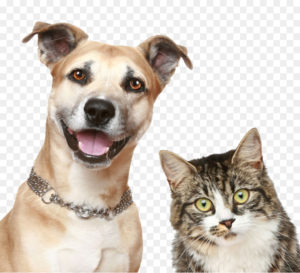 kisspng-dog-cat-puppy-pet-sitting-pet-dog-cat-5a982f79dd2544.0044011015199230659058
